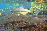 Flutuacao Aquario Natural Baia Bonita